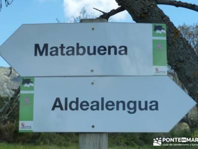 El pinar del Puerto de Navafría;viajes culturales;excursiones y senderismo;fiesta de la almudena